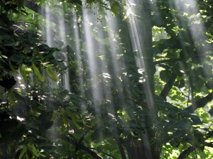 light-through-leafs