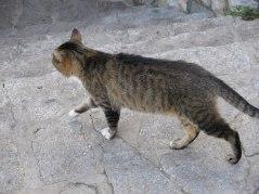 Furry friend in Drvengrad