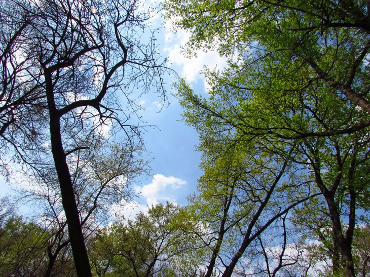 Tree tops an a blue sky